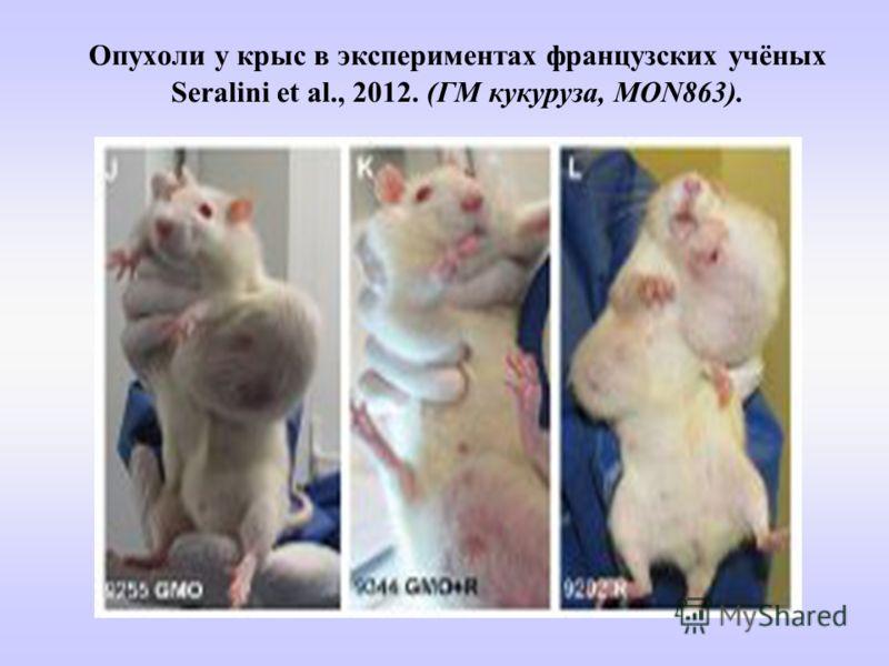 Опухоли у крыс в экспериментах французских учёных Seralini et al., 2012. (ГМ кукуруза, MON863).