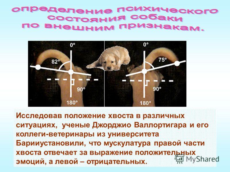 Исследовав положение хвоста в различных ситуациях, ученые Джорджио Валлортигара и его коллеги-ветеринары из университета Барииустановили, что мускулатура правой части хвоста отвечает за выражение положительных эмоций, а левой – отрицательных.