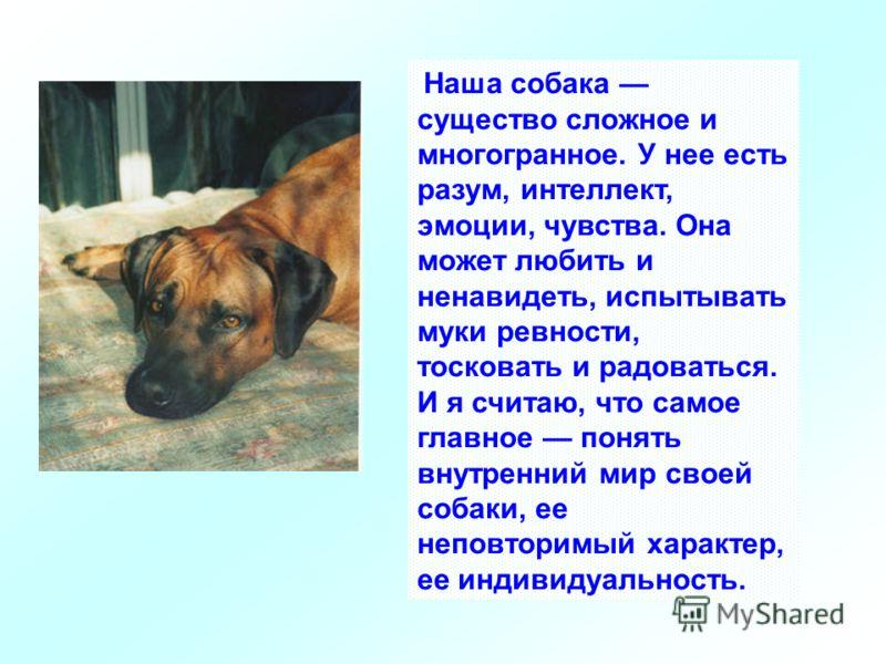 Наша собака существо сложное и многогранное. У нее есть разум, интеллект, эмоции, чувства. Она может любить и ненавидеть, испытывать муки ревности, тосковать и радоваться. И я считаю, что самое главное понять внутренний мир своей собаки, ее неповтори