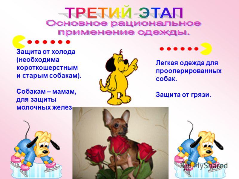 Легкая одежда для прооперированных собак. Защита от грязи. Защита от холода (необходима короткошерстным и старым собакам). Собакам – мамам, для защиты молочных желез.
