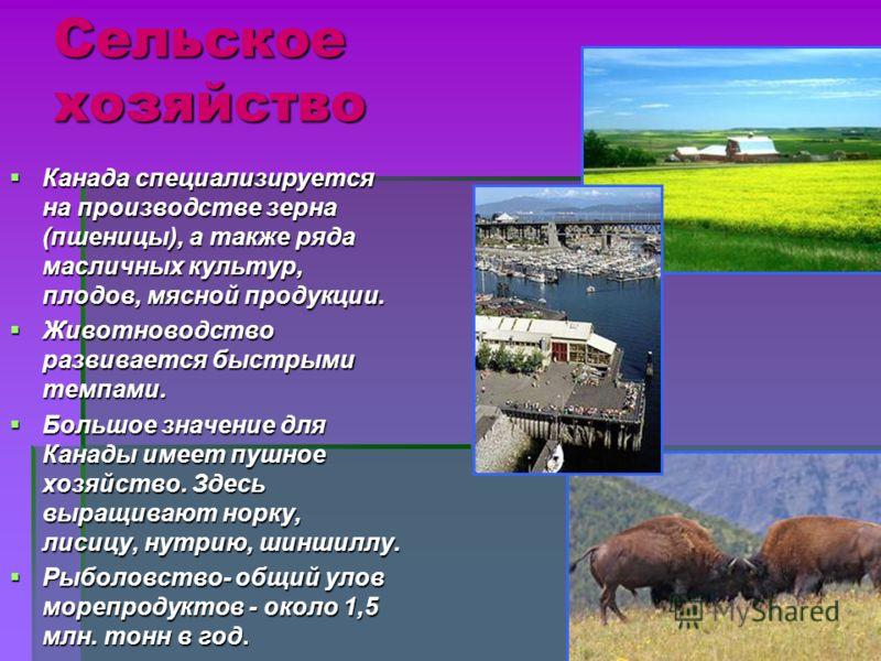 Сельское хозяйство Канада специализируется на производстве зерна (пшеницы), а также ряда масличных культур, плодов, мясной продукции. Канада специализируется на производстве зерна (пшеницы), а также ряда масличных культур, плодов, мясной продукции. Ж
