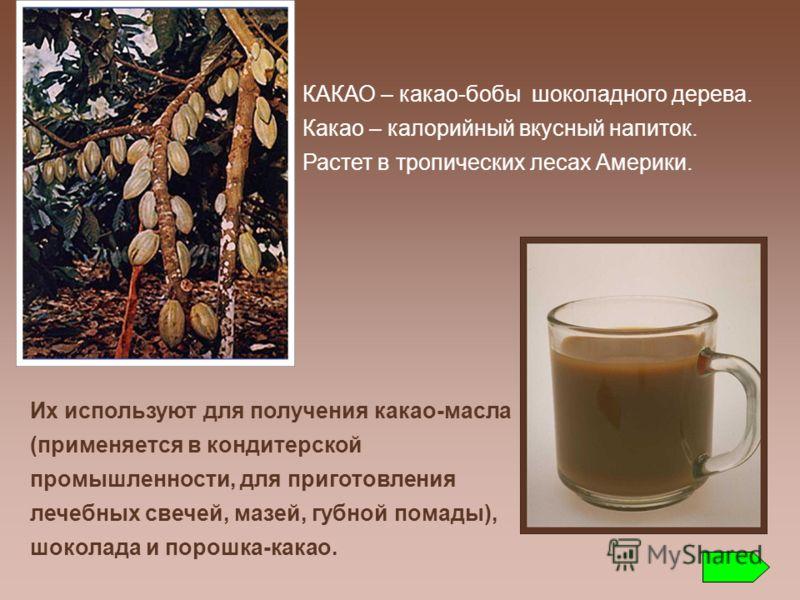 КАКАО – какао-бобы шоколадного дерева. Какао – калорийный вкусный напиток. Растет в тропических лесах Америки. Их используют для получения какао-масла (применяется в кондитерской промышленности, для приготовления лечебных свечей, мазей, губной помады