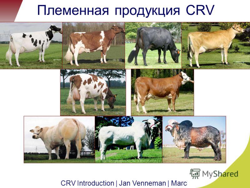 CRV Introduction | Jan Venneman | March 2011 | 10 Племенная продукция CRV