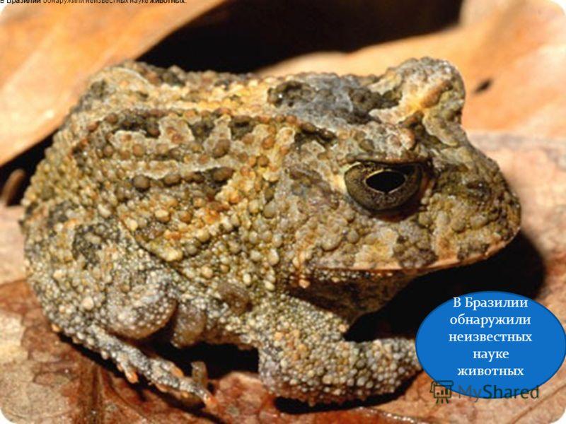В Бразилии обнаружили неизвестных науке животных В Бразилии обнаружили неизвестных науке животных.