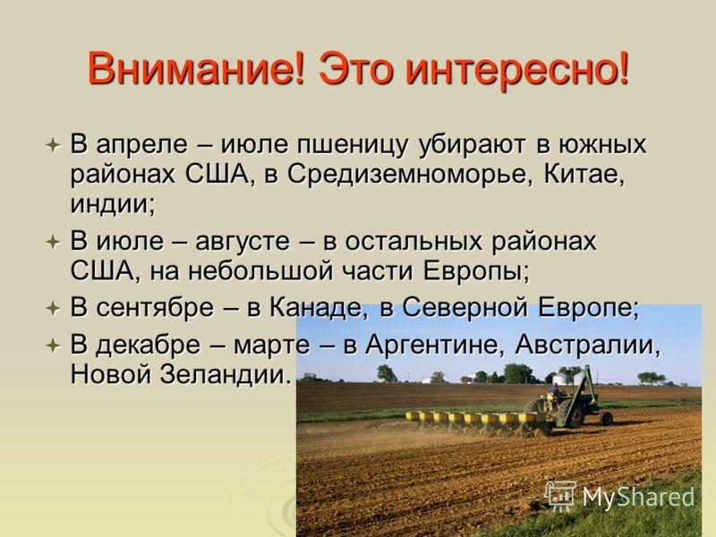 Внимание! Это интересно! В апреле – июле пшеницу убирают в южных районах США, в Средиземноморье, Китае, индии; В апреле – июле пшеницу убирают в южных районах США, в Средиземноморье, Китае, индии; В июле – августе – в остальных районах США, на неболь