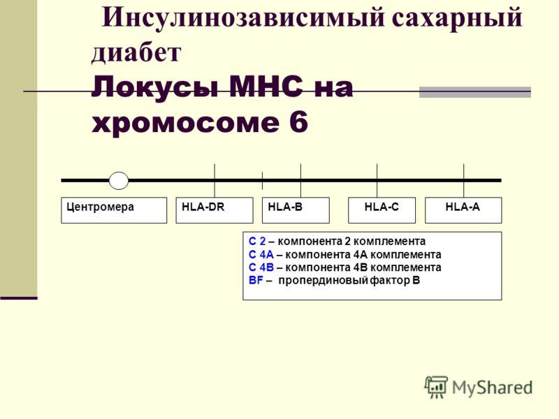 Инсулинозависимый сахарный диабет Локусы МНС на хромосоме 6 ЦентромераHLA-DRHLA-BHLA-CHLA-A C 2 – компонента 2 комплемента С 4А – компонента 4А комплемента С 4В – компонента 4В комплемента BF – пропердиновый фактор В