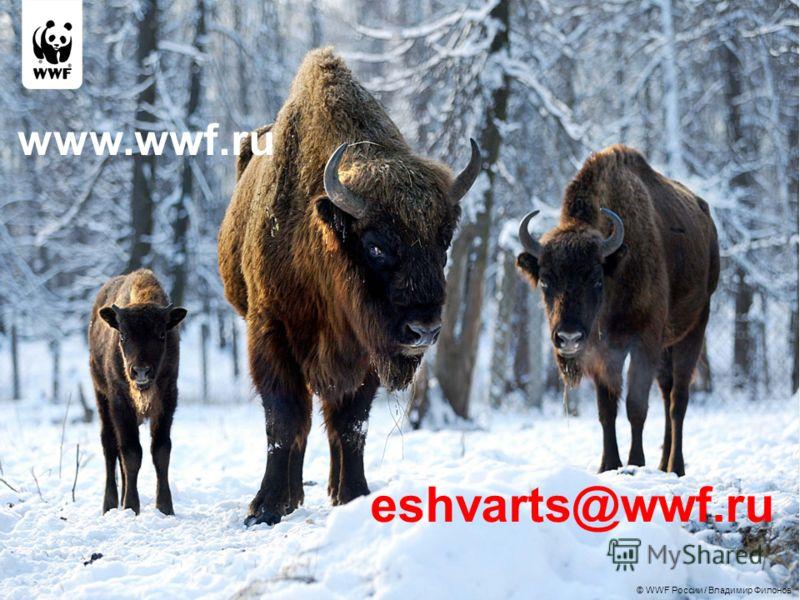 © WWF России / Владимир Филонов eshvarts@wwf.ru www.wwf.ru