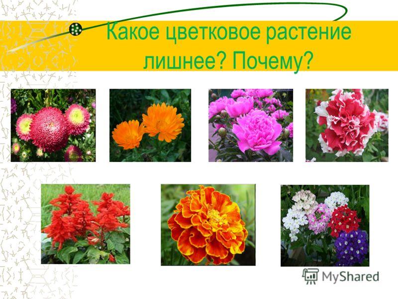 Цветковые растения однолетние