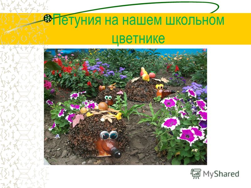Словарная работа Ампельные растения это декоративные растения с длинными гибкими побегами, которые вьются вверх или стелются по земле.