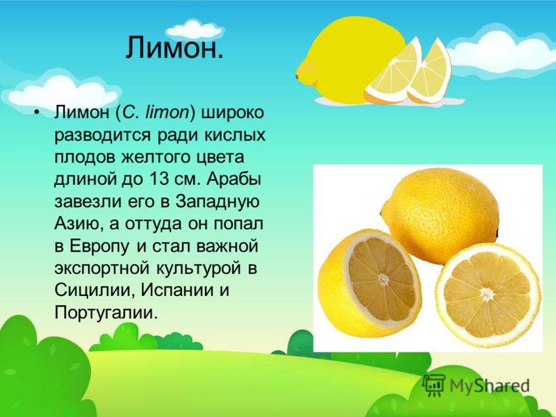 Лимон. Лимон (C. limon) широко разводится ради кислых плодов желтого цвета длиной до 13 см. Арабы завезли его в Западную Азию, а оттуда он попал в Европу и стал важной экспортной культурой в Сицилии, Испании и Португалии.