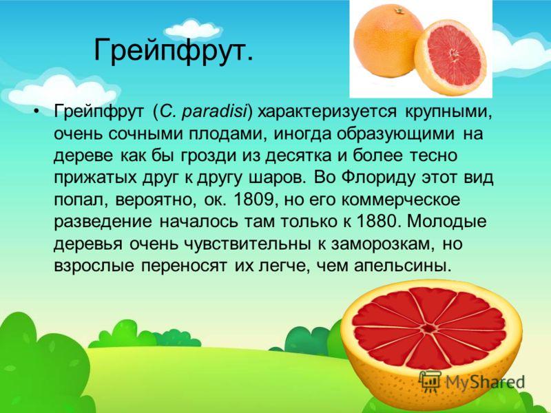 Грейпфрут. Грейпфрут (C. paradisi) характеризуется крупными, очень сочными плодами, иногда образующими на дереве как бы грозди из десятка и более тесно прижатых друг к другу шаров. Во Флориду этот вид попал, вероятно, ок. 1809, но его коммерческое ра