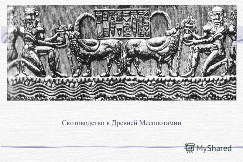 Скотоводство в Древней Месопотамии