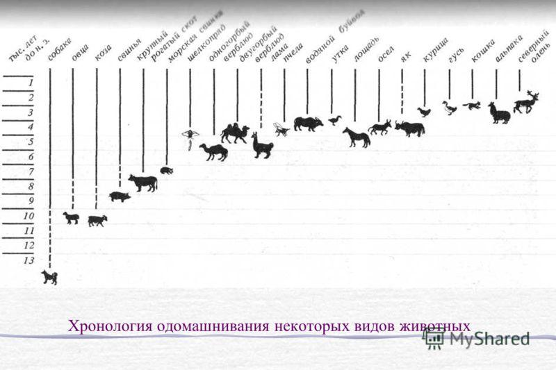 Хронология одомашнивания некоторых видов животных
