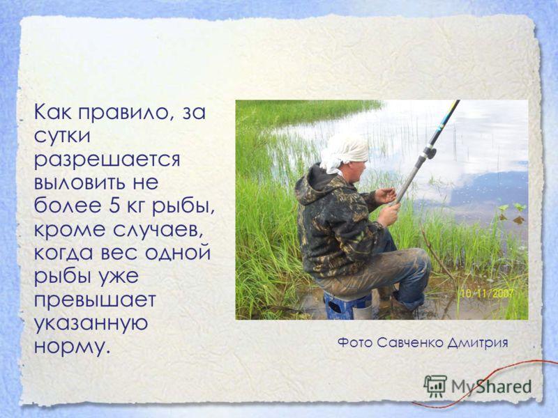 Как правило, за сутки разрешается выловить не более 5 кг рыбы, кроме случаев, когда вес одной рыбы уже превышает указанную норму. Фото Савченко Дмитрия