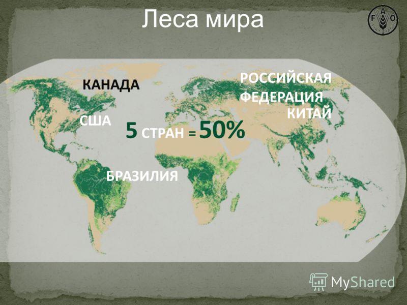5 СТРАН = 50% США КАНАДА РОССИЙСКАЯ ФЕДЕРАЦИЯ БРАЗИЛИЯ КИТАЙ Леса мира