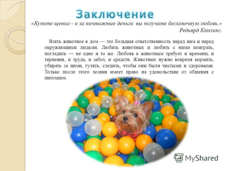 «Купите щенка – и за ничтожные деньги вы получите бесконечную любовь.» Редьярд Киплинг. Взять животное в дом это большая ответственность перед ним и перед окружающими людьми. Любить животных и любить с ними поиграть, погладить не одно и то же. Любовь