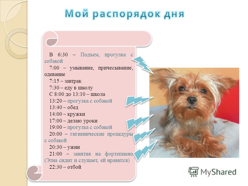 В 6:30 – Подъем, прогулка с собакой 7:00 – умывание, причесывание, одевание 7:15 – завтрак 7:30 – еду в школу С 8:00 до 13:10 – школа 13:20 – прогулка с собакой 13:40 – обед 14:00 – кружки 17:00 – делаю уроки 19:00 – прогулка с собакой 20:00 – гигиен