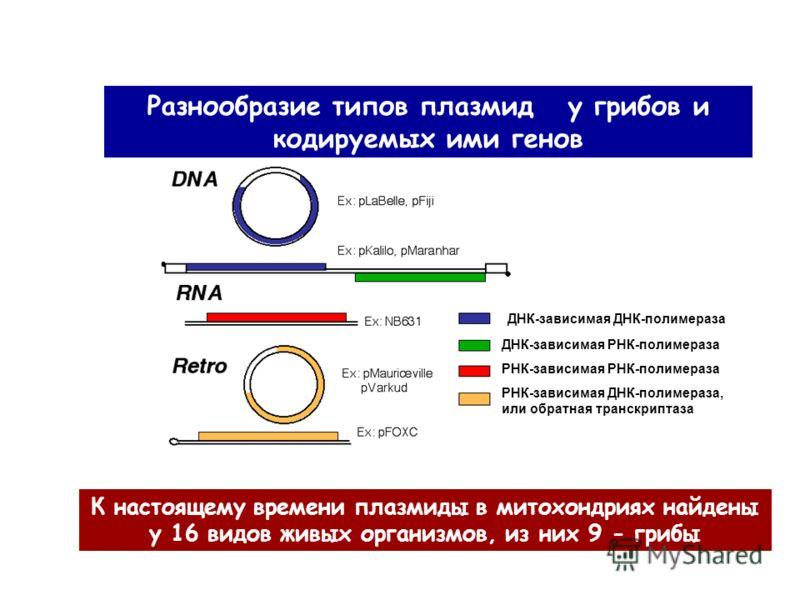 Разнообразие типов плазмид у грибов и кодируемых ими генов К настоящему времени плазмиды в митохондриях найдены у 16 видов живых организмов, из них 9 - грибы ДНК-зависимая ДНК-полимераза ДНК-зависимая РНК-полимераза РНК-зависимая РНК-полимераза РНК-з