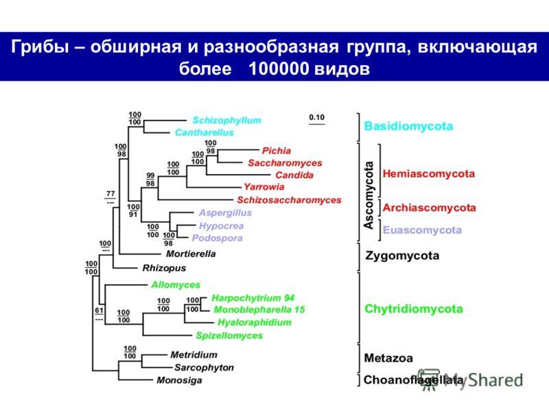 Грибы – обширная и разнообразная группа, включающая более 100000 видов