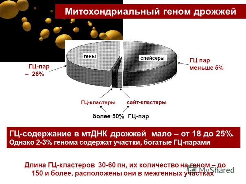 ГЦ-содержание в мтДНК дрожжей мало – от 18 до 25%. Однако 2-3% генома содержат участки, богатые ГЦ-парами Митохондриальный геном дрожжей Длина ГЦ-кластеров 30-60 пн, их количество на геном – до 150 и более, расположены они в межгенных участках спейсе