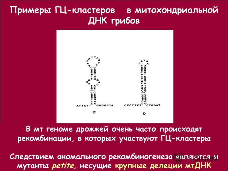 Примеры ГЦ-кластеров в митохондриальной ДНК грибов В мт геноме дрожжей очень часто происходят рекомбинации, в которых участвуют ГЦ-кластеры Следствием аномального рекомбиногенеза являются и мутанты petite, несущие крупные делеции мтДНК