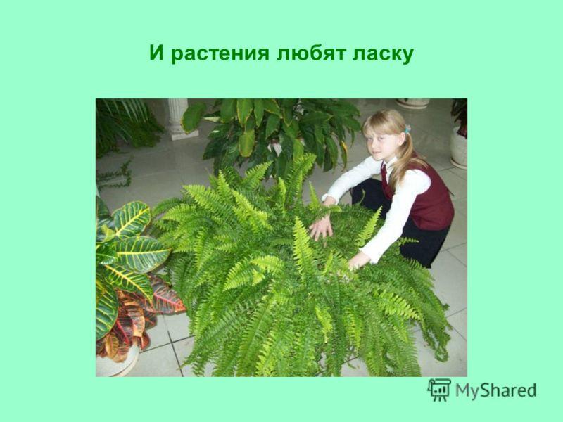 И растения любят ласку