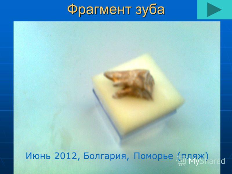 Фрагмент зуба Июнь 2012, Болгария, Поморье (пляж)