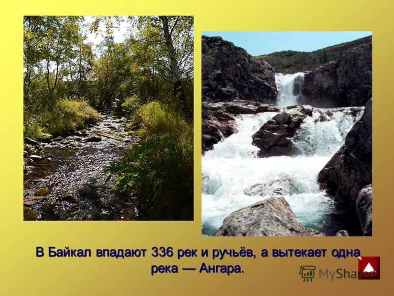 В Байкал впадают 336 рек и ручьёв, а вытекает одна река Ангара.