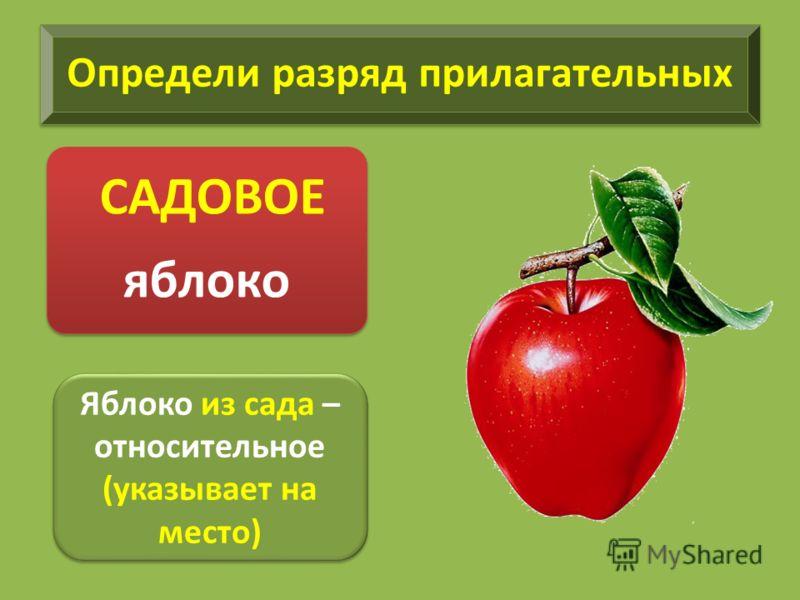 Определи разряд прилагательных САДОВОЕ яблоко Яблоко из сада – относительное (указывает на место) Яблоко из сада – относительное (указывает на место)