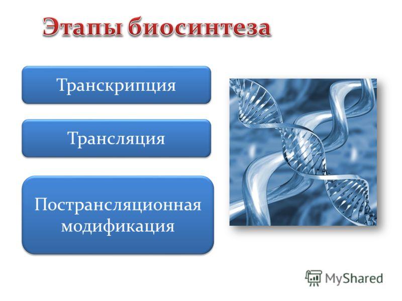 Транскрипция Трансляция Пострансляционная модификация
