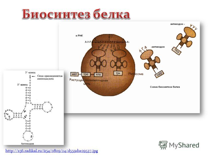 http://s56.radikal.ru/i154/0809/24/d559d1e29537.jpg