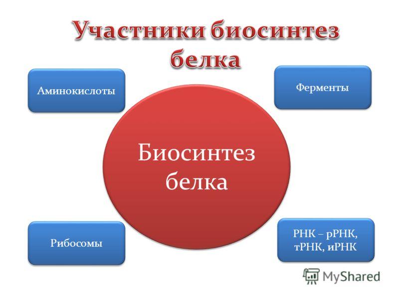 Аминокислоты Ферменты Рибосомы РНК – рРНК, тРНК, иРНК Биосинтез белка Биосинтез белка