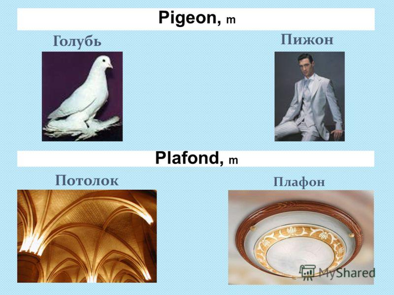 Pigeon, m Голубь Пижон Потолок Плафон Plafond, m