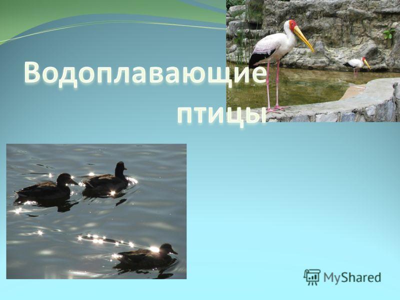 водоплавающие птицы фото и названия подмосковья