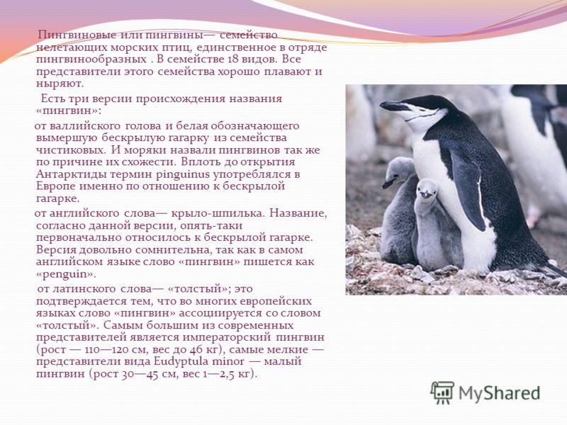 Пингвиновые или пингвины семейство нелетающих морских птиц, единственное в отряде пингвинообразных. В семействе 18 видов. Все представители этого семейства хорошо плавают и ныряют. Есть три версии происхождения названия «пингвин»: от валлийского голо