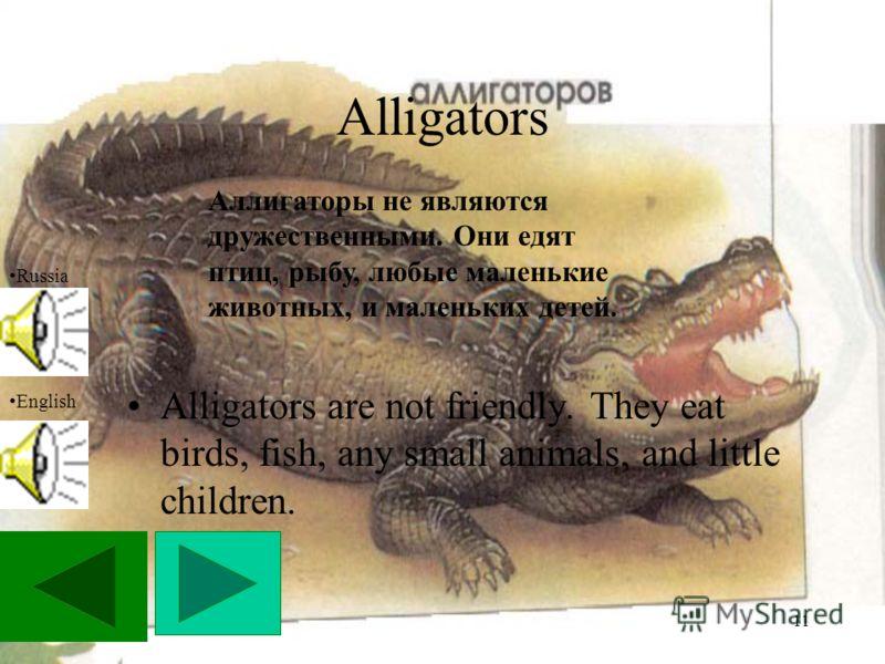 11 Alligators Alligators are not friendly. They eat birds, fish, any small animals, and little children. Russia English Аллигаторы не являются дружественными. Они едят птиц, рыбу, любые маленькие животных, и маленьких детей.
