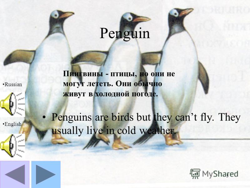 5 Penguin Penguins are birds but they cant fly. They usually live in cold weather. Russian English Пингвины - птицы, но они не могут лететь. Они обычно живут в холодной погоде.