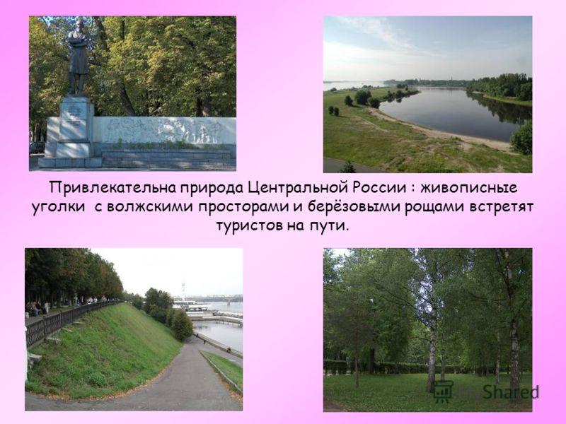 Привлекательна природа Центральной России : живописные уголки с волжскими просторами и берёзовыми рощами встретят туристов на пути.