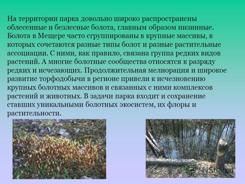 На территории парка довольно широко распространены облесенные и безлесные болота, главным образом низинные. Болота в Мещере часто сгруппированы в крупные массивы, в которых сочетаются разные типы болот и разные растительные ассоциации. С ними, как пр