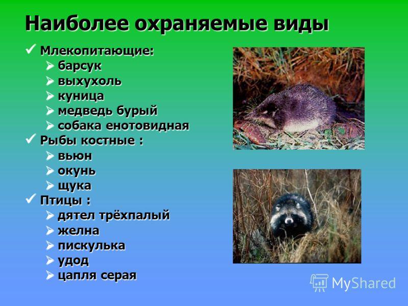 Наиболее охраняемые виды Млекопитающие: Млекопитающие: барсук барсук выхухоль выхухоль куница куница медведь бурый медведь бурый собака енотовидная собака енотовидная Рыбы костные : Рыбы костные : вьюн вьюн окунь окунь щука щука Птицы : Птицы : дятел