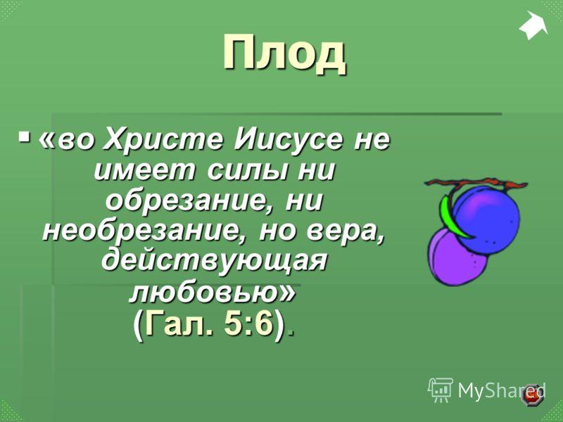 « во Христе Иисусе не имеет силы ни обрезание, ни необрезание, но вера, действующая любовью » (Гал. 5:6). « во Христе Иисусе не имеет силы ни обрезание, ни необрезание, но вера, действующая любовью » (Гал. 5:6). Плод