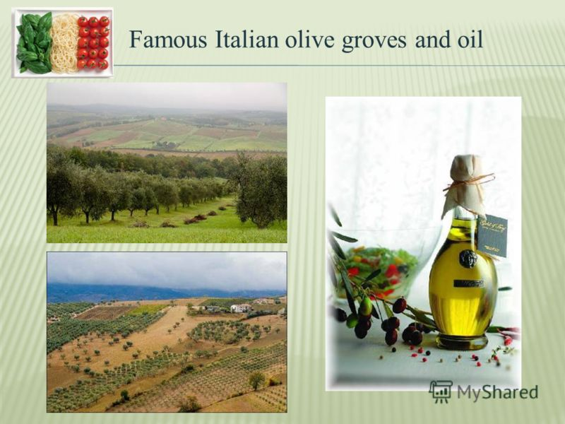 Famous Italian olive groves and oil
