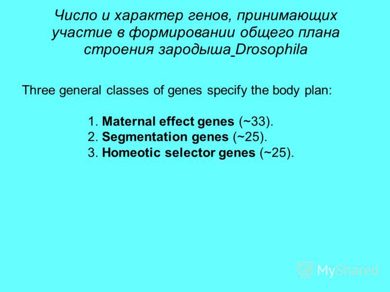 Число и характер генов, принимающих участие в формировании общего плана строения зародыша Drosophila Three general classes of genes specify the body plan: 1. Maternal effect genes (~33). 2. Segmentation genes (~25). 3. Homeotic selector genes (~25).