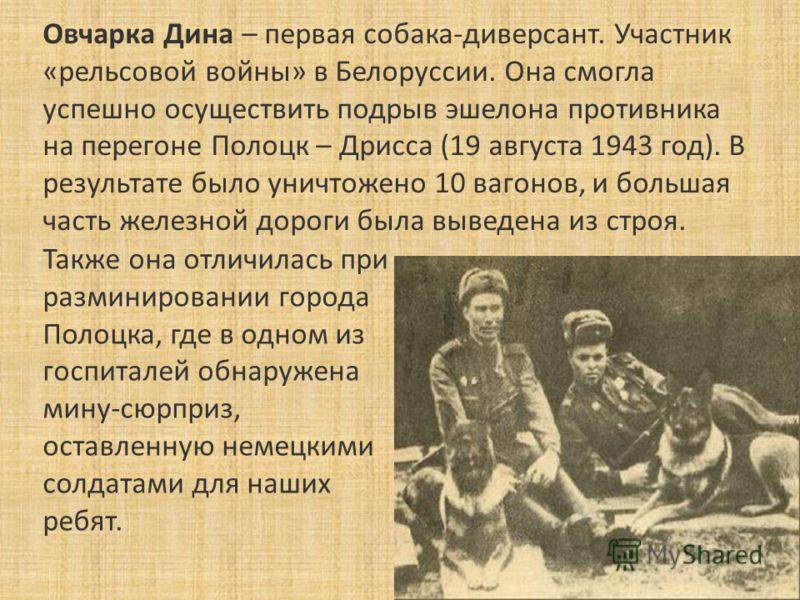 Овчарка Дина – первая собака-диверсант. Участник «рельсовой войны» в Белоруссии. Она смогла успешно осуществить подрыв эшелона противника на перегоне Полоцк – Дрисса (19 августа 1943 год). В результате было уничтожено 10 вагонов, и большая часть желе