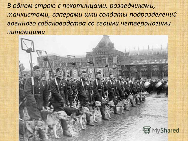 В одном строю с пехотинцами, разведчиками, танкистами, саперами шли солдаты подразделений военного собаководства со своими четвероногими питомцами