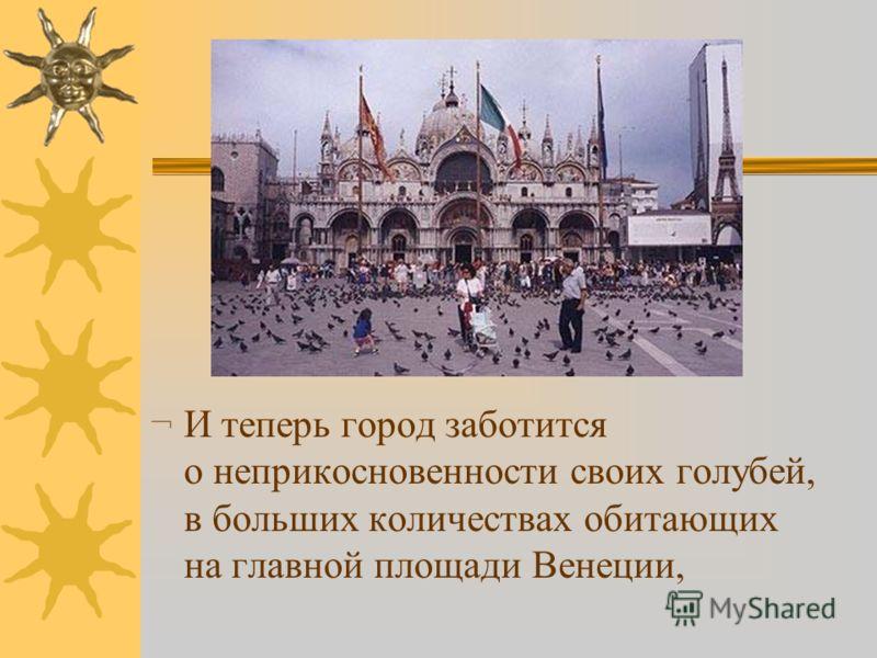¬ И теперь город заботится о неприкосновенности своих голубей, в больших количествах обитающих на главной площади Венеции,