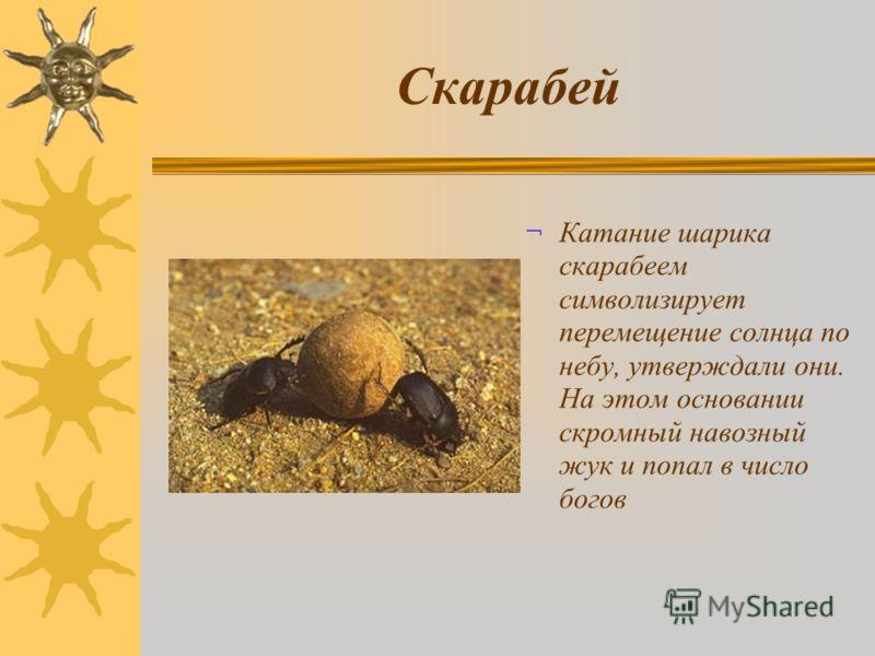 Скарабей ¬ Катание шарика скарабеем символизирует перемещение солнца по небу, утверждали они. На этом основании скромный навозный жук и попал в число богов