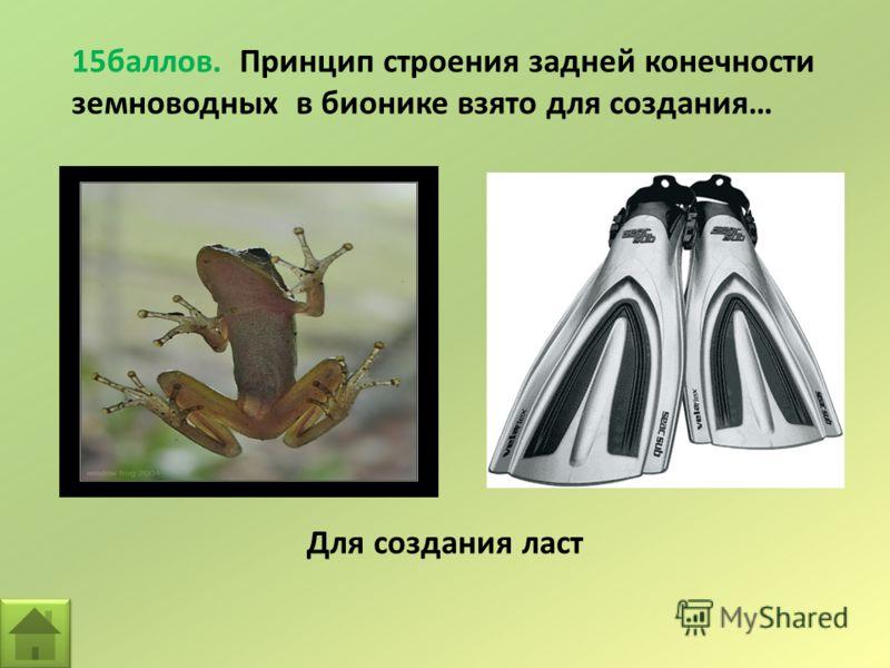 15баллов. Принцип строения задней конечности земноводных в бионике взято для создания… Для создания ласт