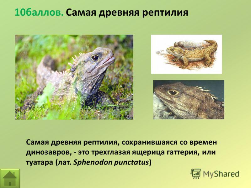 10баллов. Самая древняя рептилия Самая древняя рептилия, сохранившаяся со времен динозавров, - это трехглазая ящерица гаттерия, или туатара (лат. Sphenodon punctatus)