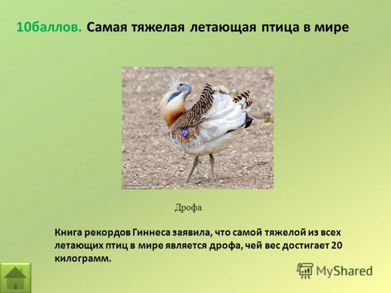 10баллов. Самая тяжелая летающая птица в мире Дрофа Книга рекордов Гиннеса заявила, что самой тяжелой из всех летающих птиц в мире является дрофа, чей вес достигает 20 килограмм.